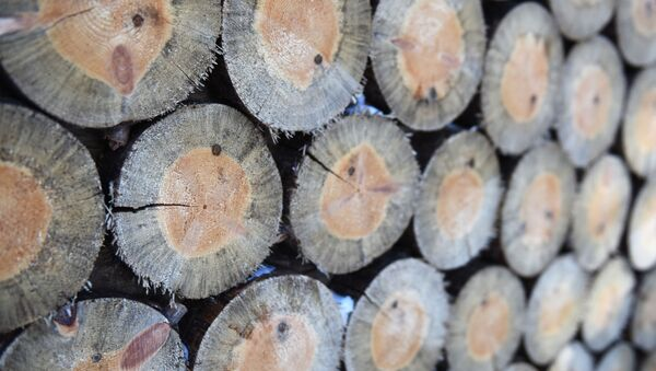 gỗ - Sputnik Việt Nam