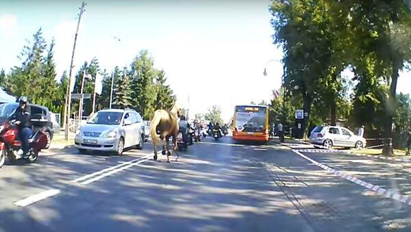 Ngựa làm ngã tài xế lái xe mô tô trước cuộc diễu hành mô tô ở Ba Lan - Sputnik Việt Nam