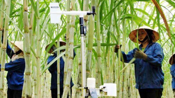 Asia Nikkei Review nắm bắt những tín hiệu cho thấy sự chuyển dịch công nghệ trong nền kinh tế Việt Nam. - Sputnik Việt Nam
