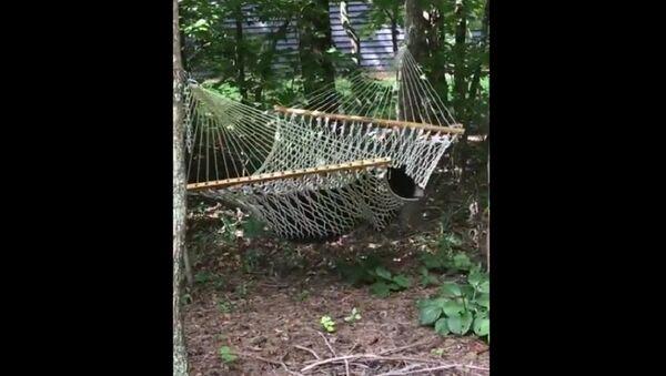 Một phụ nữ ở Mỹ quay cảnh con gấu tới nằm nghỉ trên võng của bà - Sputnik Việt Nam
