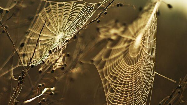 mạng nhện - Sputnik Việt Nam