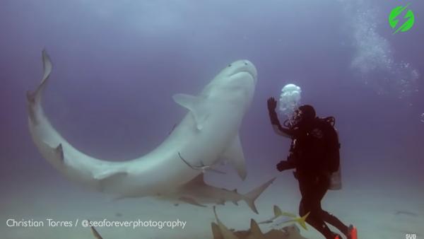 Người thợ lặn thôi miên con cá mập (Video) - Sputnik Việt Nam