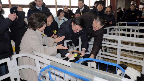 Bà Thái Hương cùng Thống đốc vùng Matxcova chào đón chú bê con Gmilk đầu tiên - Sputnik Việt Nam