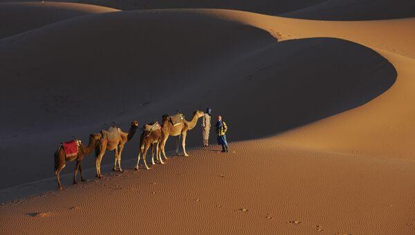 Человек и верблюды на дороге тысячи крепостей в пустыне Сахара, Марокко - Sputnik Việt Nam