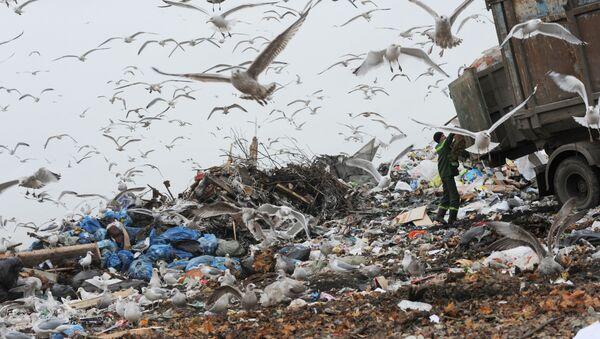 Выгрузка мусора на свалке бытовых отходов в Ленинградской области - Sputnik Việt Nam