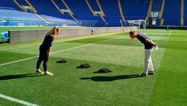 Chuột chũi đào lỗ ở sân vận động của đội Shakhter trước trận đấu Champions League - Sputnik Việt Nam