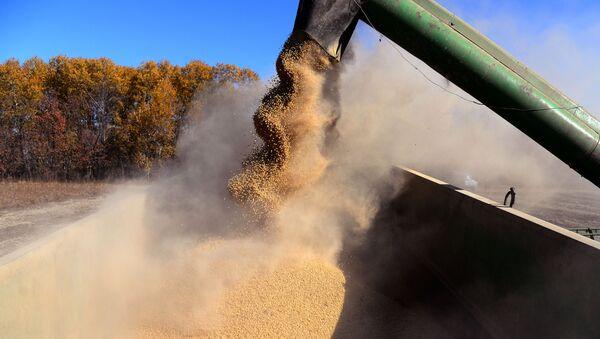 Комбайн выгружает бобы во время уборки сои в Хабаровском крае - Sputnik Việt Nam