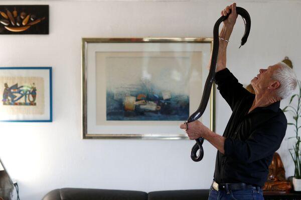 Người Pháp 67 tuổi Philippe Gillet với rắn hổ mang màu đen tại nhà của ông ở Couëron, gần Nantes - Sputnik Việt Nam