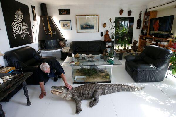 Người yêu thích bò sát 67 tuổi Philippe Gillet nuôi cá sấu tên là Ali  bằng thịt gà tại nhà của ông ở thành phố Couëron, gần Nantes - Sputnik Việt Nam