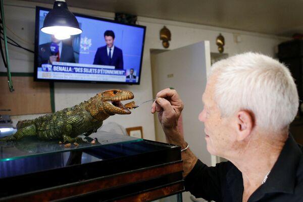 Người yêu thích bò sát 67 tuổi Philippe Gillet với con thằn lằn caiman  tại nhà của ông ở thành phố Couëron, gần Nantes - Sputnik Việt Nam