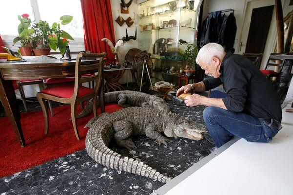 Người yêu thích bò sát 67 tuổi Philippe Gillet với cá sấu tại nhà của ông ở thành phố Couëron, Pháp - Sputnik Việt Nam