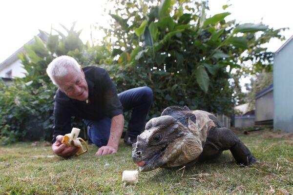 Người yêu thích bò sát 67 tuổi Philippe Gillet nuôi cự đà trong khu vườn nhà của mình ở thành phố Couëron, Pháp - Sputnik Việt Nam