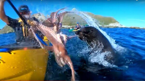 Hải cẩu ném con bạch tuộc vào mặt người lên mạng YouTube - Sputnik Việt Nam