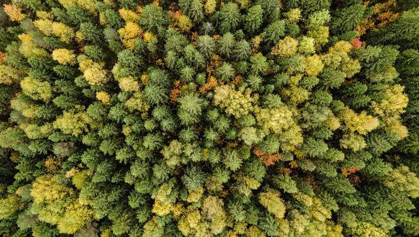 Rừng mùa thu ở khu vực Perm - Sputnik Việt Nam
