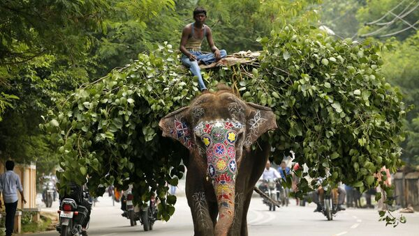 Слон на улице Индии - Sputnik Việt Nam