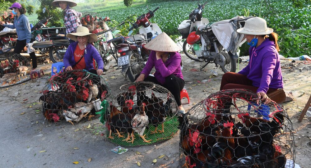 Những người phụ nữ đang bán gà ở chợ quê ngoại ô Hà Nội, Việt Nam