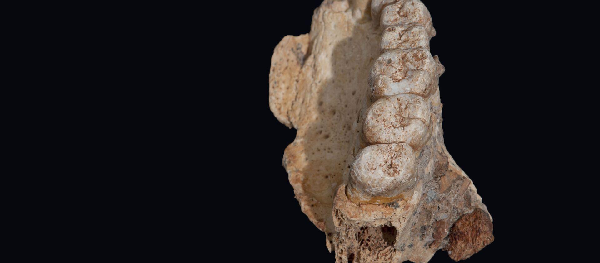 Фрагмент челюсти, обнаруженный в пещере Мислия на севере Израиля - Sputnik Việt Nam, 1920, 03.02.2020