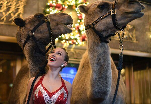 Thành viên nhóm nhảy Radio City Rockette với lạc đà trước chương trình trình diễn ngày Giáng sinh - Sputnik Việt Nam
