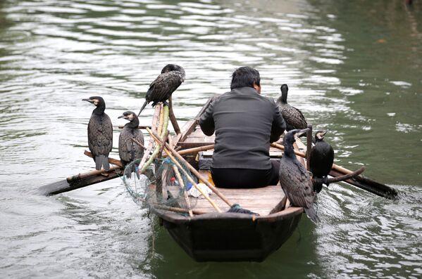 Ngư dân với các con chim được huấn luyện bắt cá trên sông Wuzhen, Trung Quốc - Sputnik Việt Nam