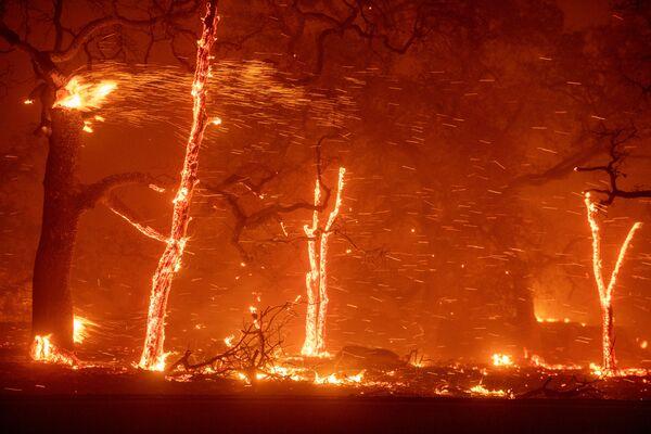 Cháy rừng ở vùng lân cận Paradise, California - Sputnik Việt Nam