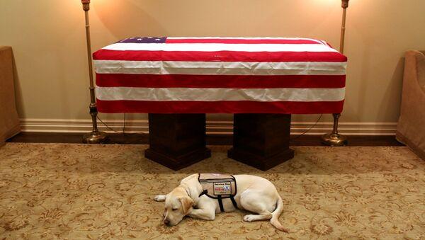 """Con chó không rời linh cữu cựu tổng thống George Bush-cha """"đốn tim"""" hàng triệu người - Sputnik Việt Nam"""