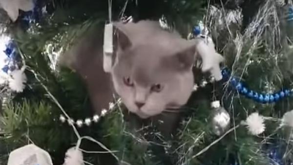 Một chút mèo to ở Úc dạo chơi trên cây thông Noel  (Video) - Sputnik Việt Nam
