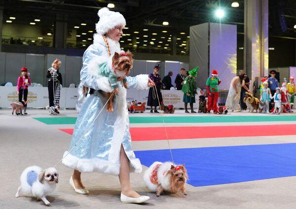 Bọn cún và nữ chủ nhân dự cuộc thi trang phục tại triển lãm, Matxcơva - Sputnik Việt Nam