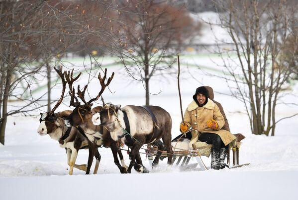 Cưỡi xe kéo với tuần lộc và chó kéo trong công viên Tsaritsyno ở Moskva - Sputnik Việt Nam