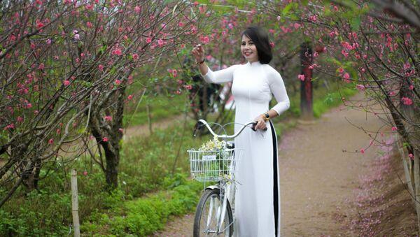 Hoa đào nở sớm còn là dịp để các thiếu nữ lên vườn đào Nhật Tân ngắm cảnh, chụp ảnh. - Sputnik Việt Nam