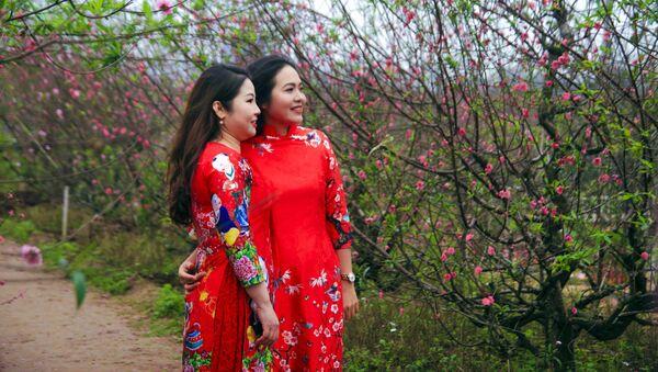 Người dân thích thú ngắm hoa đào nở sớm tại vườn hoa Nhật Tân, quận Tây Hồ. - Sputnik Việt Nam