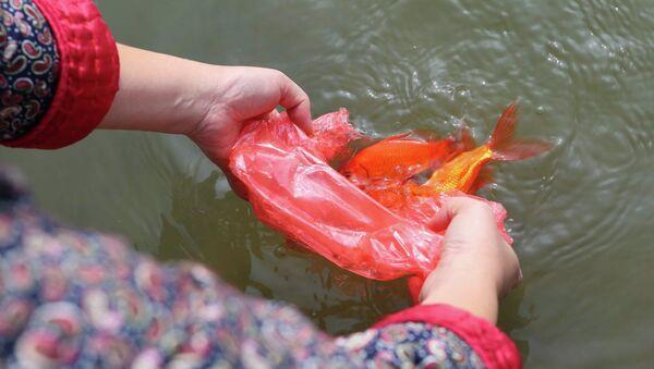 Người dân thủ đô thủ đô thả cá chép tại khu vực hồ Ngọc Khánh. - Sputnik Việt Nam