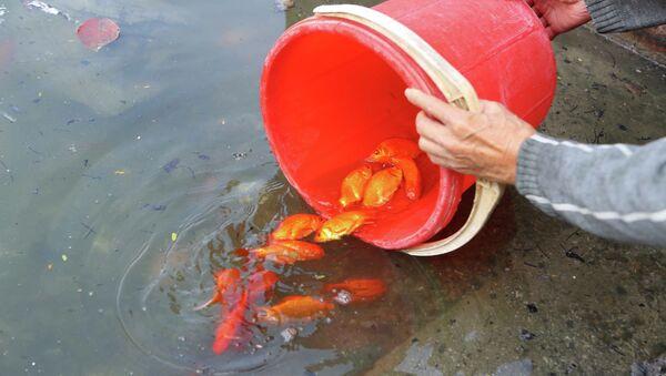 Người dân thủ đô thủ đô thả cá chép tại khu vực hồ Thủ Lệ. - Sputnik Việt Nam