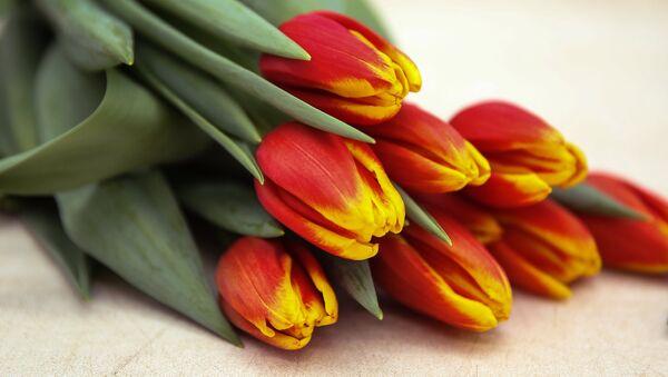 Hoa tulip - Sputnik Việt Nam
