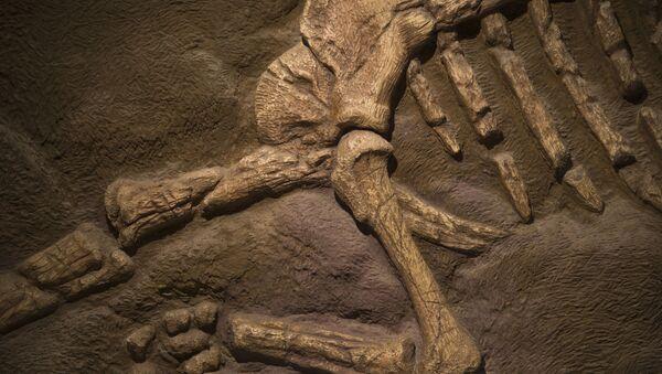 Uzbekistan: Đang sửa nhà bỗng phát hiện bộ xương nghi của khủng long  - Sputnik Việt Nam