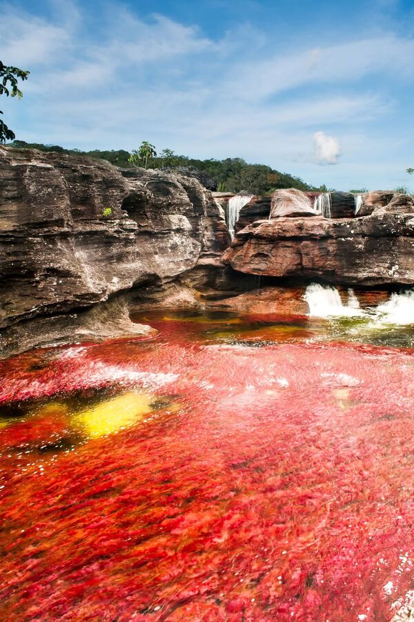 Sông Caño Cristales ở Colombia - Sputnik Việt Nam