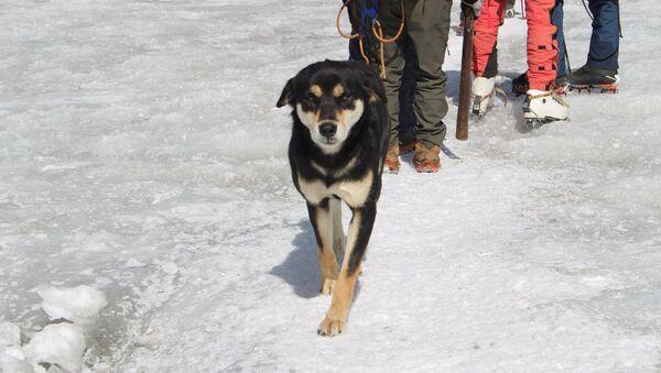 Chú chó chinh phục dãy Himalaya cùng đoàn leo núi và tìm thấy một gia đình - Sputnik Việt Nam