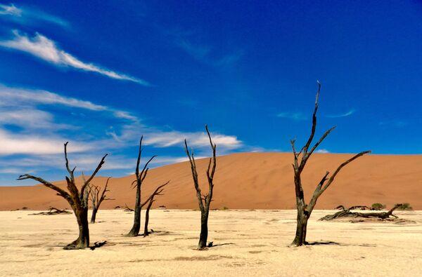 Cây khô ở sa mạc Namibia - Sputnik Việt Nam