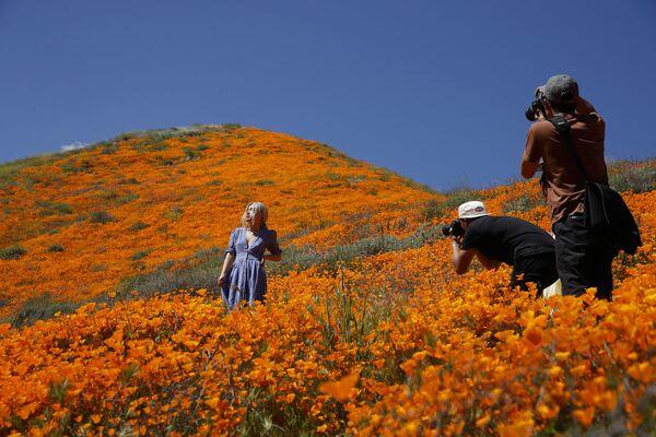 Hoa đồng nội bừng nở trên những ngọn đồi ven hồ Elsinore, California - Sputnik Việt Nam