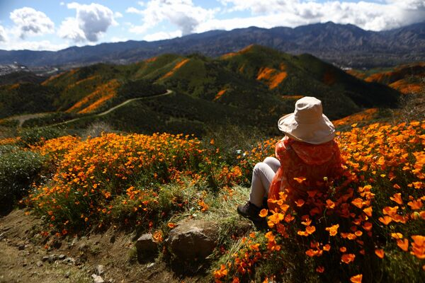 Hoa đồng nội bừng nở ở Walker Canyon, ven hồ Elsinore, California - Sputnik Việt Nam