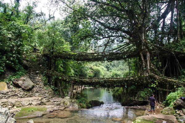 Cầu bện bằng rễ cây đa hai tầng ở Ấn Độ - Sputnik Việt Nam