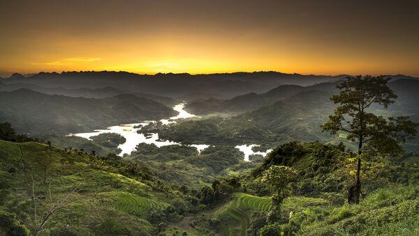 Khu rừng Việt Nam - Sputnik Việt Nam