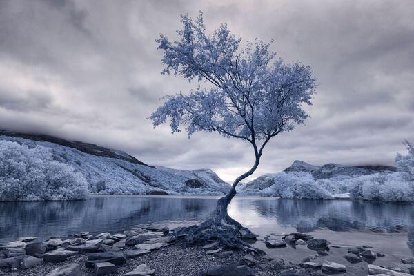 Bức ảnh Lonely Tree (Cây cô đơn) của nhiếp ảnh gia David Hall, giải nhất trong hạng mục Infrared Landscape (Phong cảnh hồng ngoại) của cuộc thi ảnh Life in Another Light - Sputnik Việt Nam