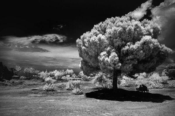 Bức ảnh In the Shadow (Trong bóng tối) của nhiếp ảnh gia Tatiana Aleynikova, đặc biệt được ghi nhận trong hạng mục IR Black & White (Ảnh đen trắng) của cuộc thi ảnh Life in Another Light - Sputnik Việt Nam