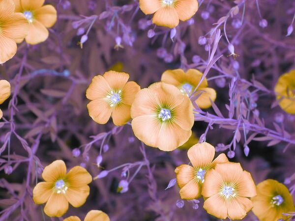 Bức ảnh Flowers (Hoa) của Kate Adler, được ghi nhận trong hạng mục Infrared Color (Màu hồng ngoại) của cuộc thi ảnh Life in Another Light. - Sputnik Việt Nam