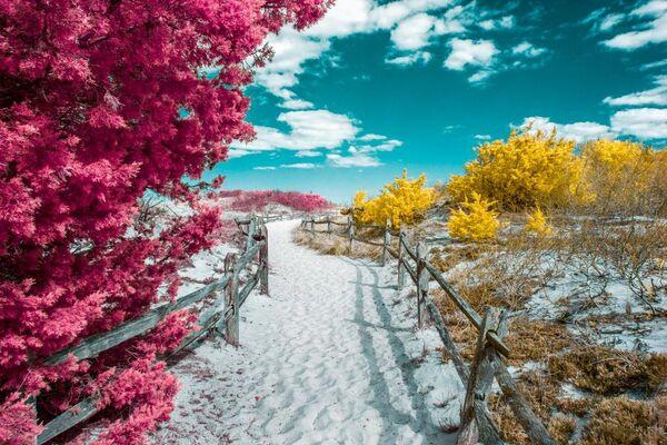 Bức ảnh Island Beach (Bãi biển trên đảo) của David Nilsen, được ghi nhận trong hạng mục Infrared Color (Màu hồng ngoại) của cuộc thi ảnh Life in Another Light. - Sputnik Việt Nam