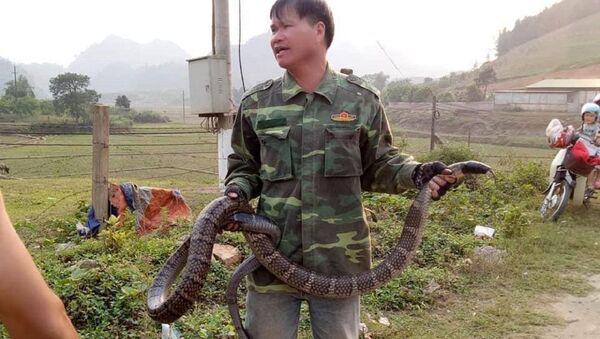 Người đàn ông cầm con rắn 6,8kg ở khu vực huyện Vân Hồ (Sơn La) - Sputnik Việt Nam