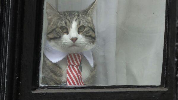 Сon mèo của Assange  - Sputnik Việt Nam