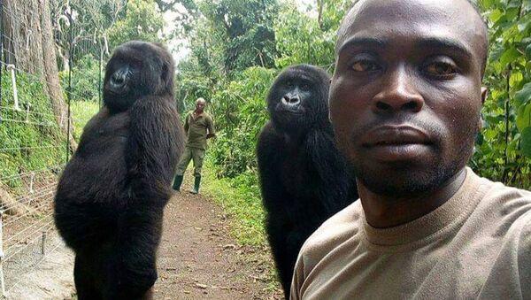 Khỉ đột Gorilla tạo dáng như người khi selfie - Sputnik Việt Nam