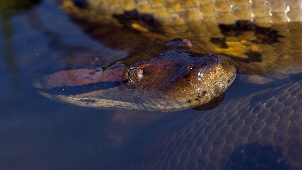 Anaconda  - Sputnik Việt Nam