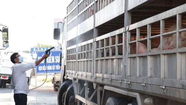 Cán bộ thú y phun thuốc tiêu độc, sát trùng phương tiện vận chuyển lợn.  - Sputnik Việt Nam